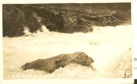 Salmon jumping at Moricetown Falls, B.C. (descriptions911)