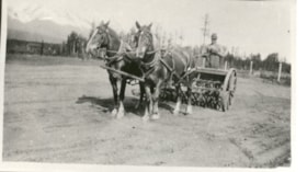 2 horses pulling unidentified man and equipment for gatheri… (descriptions1050)