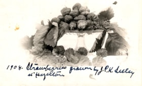 """Strawberries grown by J.P.K. Seeley at Hazelton"" (descriptions2264)"