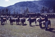 Fall Fair, 1960s (descriptions6811)