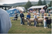 4H children with sheep at Fall Fair (descriptions9173)