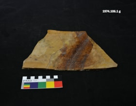 Fossil (artifacts4144)