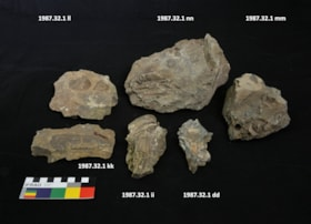 Fossil (artifacts816)
