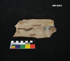 Eohidon fossil (artifacts830)