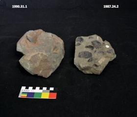 Fossil (artifacts966)