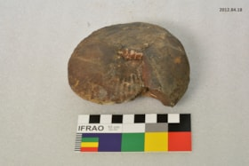 Fossil (artifacts3981)