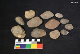 Fossil (artifacts3968)
