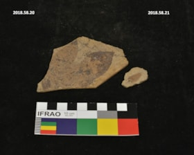 Fossil (artifacts4177)