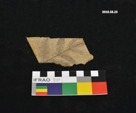 Fossil (artifacts4180)